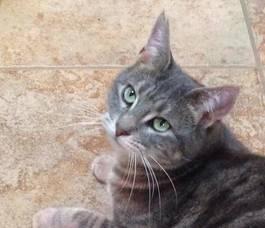 Carousel_image_ef5dff679dd114641ddf_patty_cat