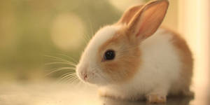 Carousel_image_f031709f8b540e52d3c5_bunny