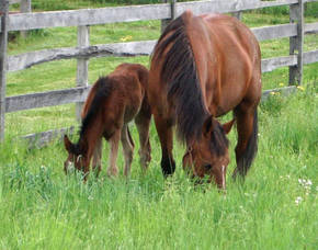 Carousel_image_f241007c939fb8ccd1a4_horses_eating_grass