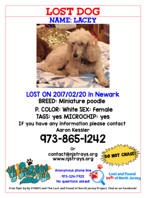 Carousel_image_f34593ae1247cfea4948_lost_dog_lacey
