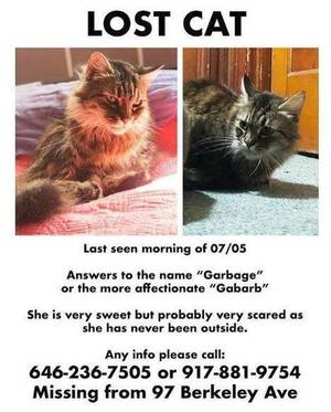 Carousel image f4a7d3016b603cb558ba lost cat garbage july 6 2018