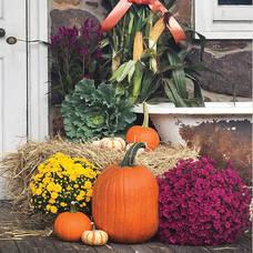 22nd Annual Harvest Festival
