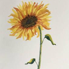 Sunflower Watercolor Class