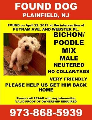 Carousel_image_f856de2e33433c8e99c7_found.dog.bichon.poodle.flyer.webster.04.22.17