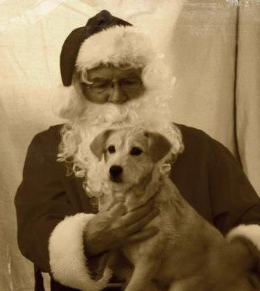 ae77605350ddab7d25a5_Lisa_Hunt_s_dog_with_Santa.jpg
