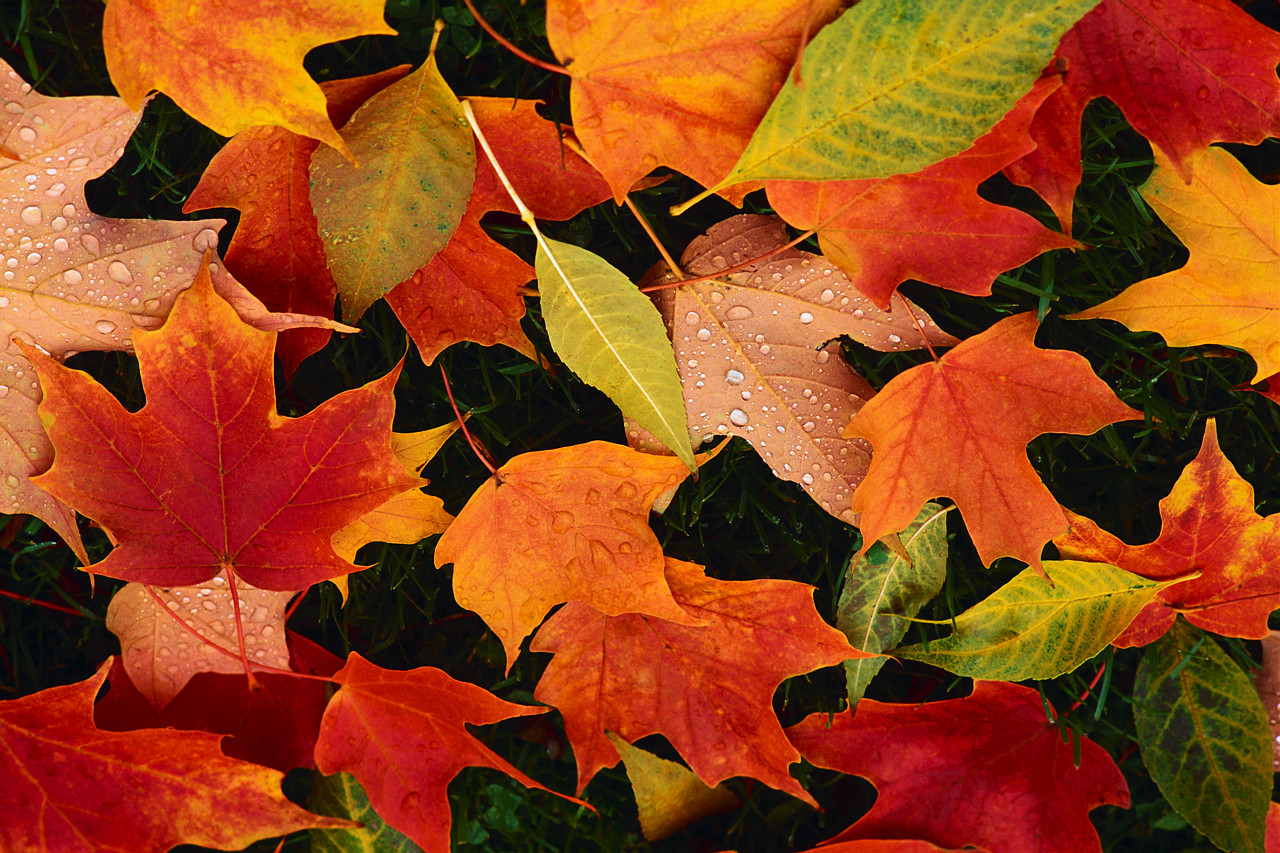 22f899077474d898e042_fall_leaves.jpg