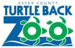 Carousel_image_db99adb5a0f8b98b2b6a_turtle_back_zoo