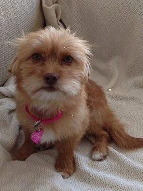 Lost Puppy, photo 1