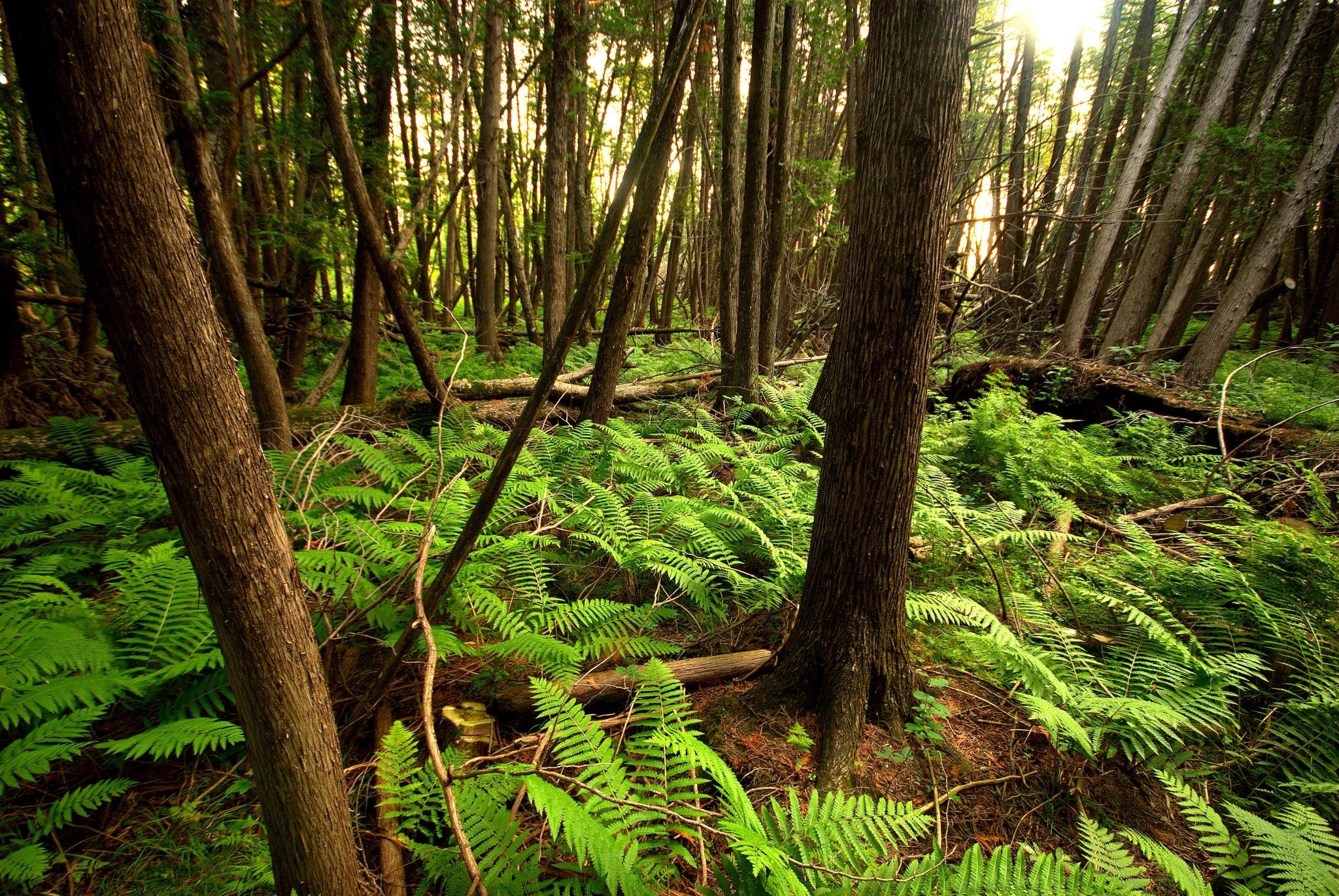aa62f64bdeafed3daa63_forest.JPG