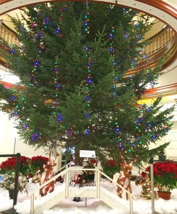 c5db4ab9b92613aa51fa_Christmas_Tree__Tina_Casey_.JPG