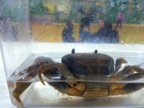 Latchkey Students Learn About Sea Life, photo 2