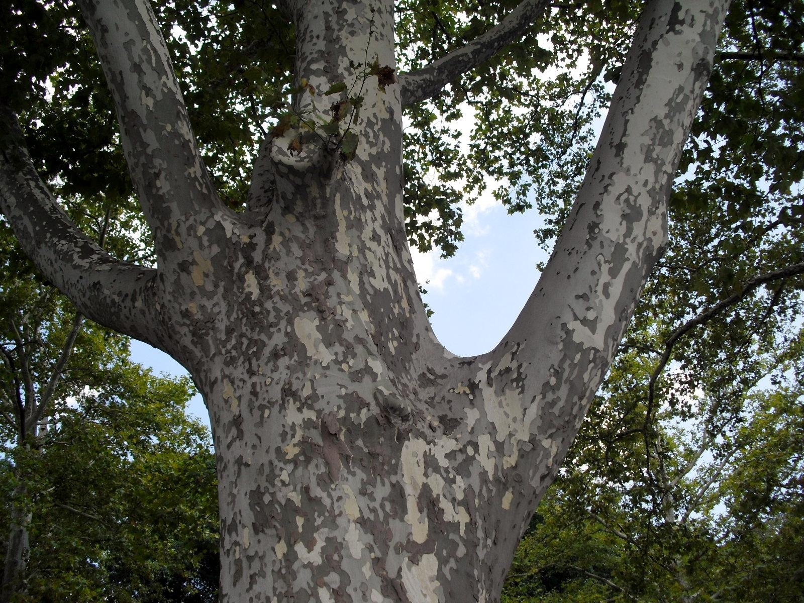b42c641f9390621a404e_Phila_-_Tree_shaped_like_hand.jpg