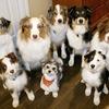 Small_thumb_72e8fb698bb23af43e59_dogs_carterse