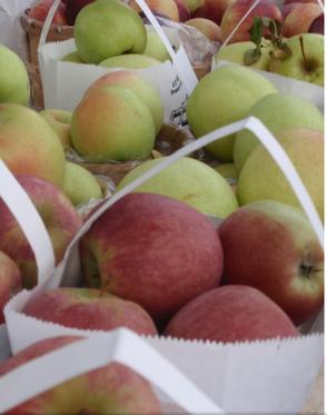 Chatham Farmer's Market Celebrates Back-to-School Week, photo 1
