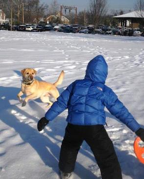 Fetching the Frisbee