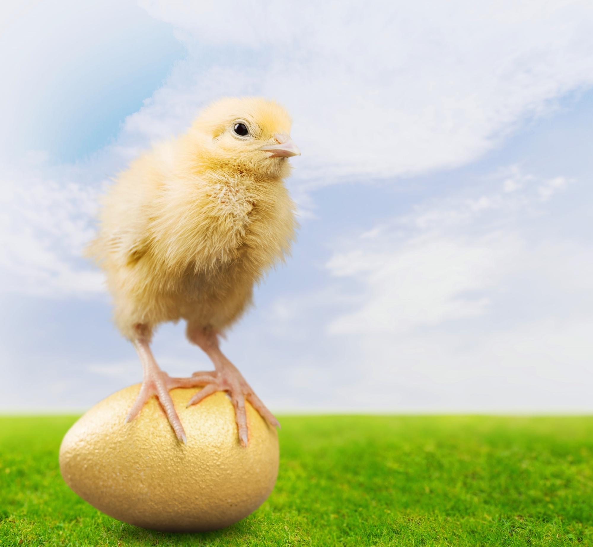 d6f58bc4871b6b8dfb81_Easter_Egg.jpg