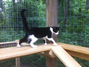 Exploration of the new Kitty Kabana at the Montville Animal Shelter
