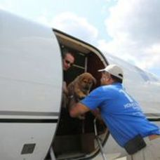 Rescue Dogs Arrive By Jet, photo 3