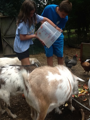 Unity Charter School helps create Environmental Harmony while Supporting Local Farm , photo 2