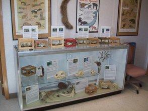 Nature Center Exhibits