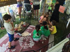 Baby Chicks Petting