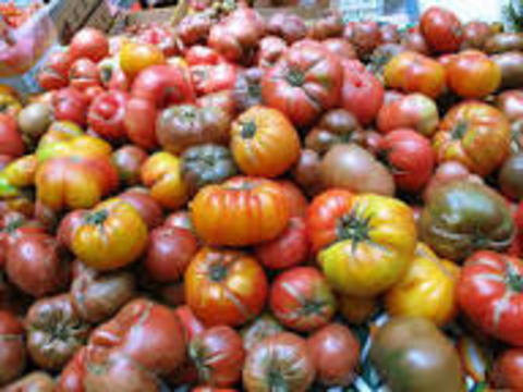 Top_story_f3edaa7159ccb027d1a5_tomatoes