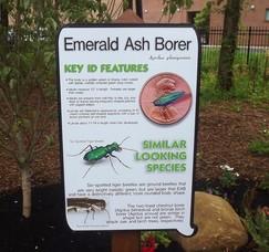 Invasive Pest Exhibit