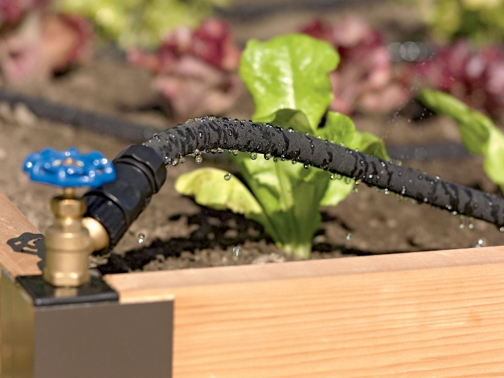 4ee855a3111a295a8392_Drip_Irrigation_raised_bed_photo_2015.jpg