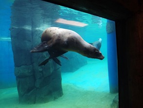 Turtle Back Zoo Sea Lions