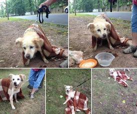 Lost Dog in Clark