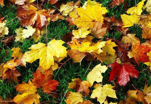 bfadc0168017336725de_leaves.jpg