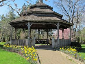 Daffodils at the Memorial Park Gazebo