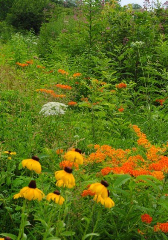 daad7bcae59b62368848_butterfly_garden_warinanco_lake_long_shot.jpg