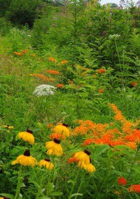 Carousel_image_daad7bcae59b62368848_butterfly_garden_warinanco_lake_long_shot
