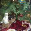 Small_thumb_84f96e3948dc071e17b4_laurine_under_christmas_tree