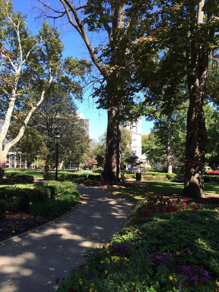 Morristown Happenings Things To Do In Morristown This Weekend News TAPinto