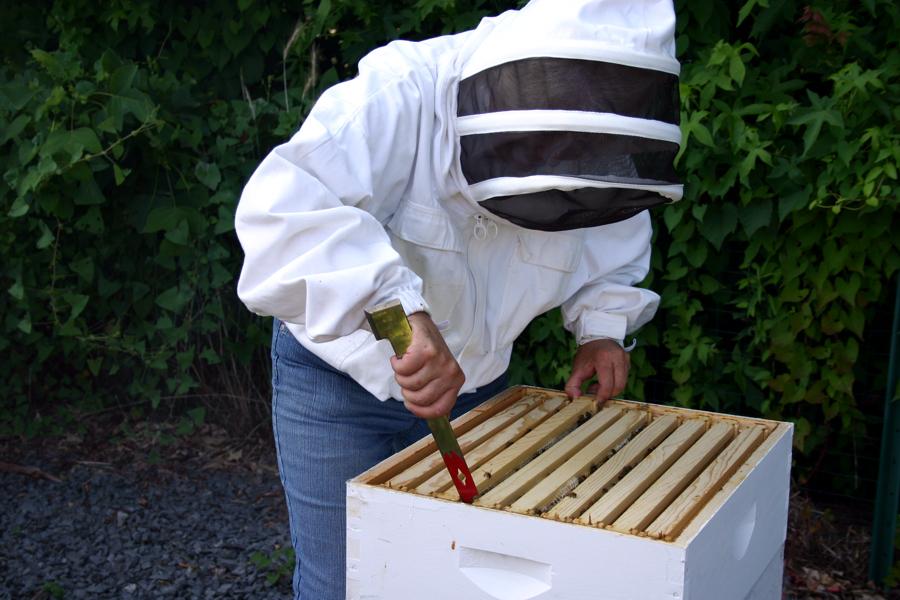 97a256c50e9401e09215_Beekeeper_Opens_Hives_4_Web.jpg