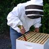Small_thumb_97a256c50e9401e09215_beekeeper_opens_hives_4_web