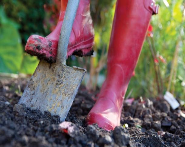 fa8c49dc58eb57dd1a60_spring_gardening.jpg