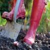 Small_thumb_fa8c49dc58eb57dd1a60_spring_gardening
