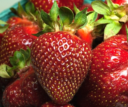 Top_story_f61bc129f248713b35a7_rutgersstrawberry