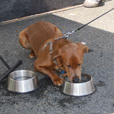 Doggie Cafe