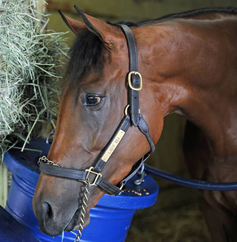 Roundup Lady Eli Retired Belmont May Host Night Racing