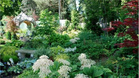 Shade gardening beyond hostas tapinto for Myers lawn and garden
