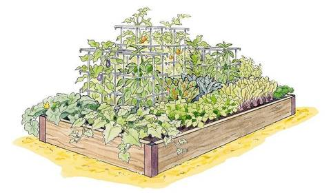 Grow a high yield vegetable garden this season news for Gardeners supply company