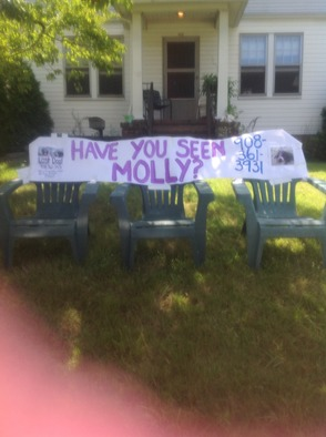 Please help find Molly!