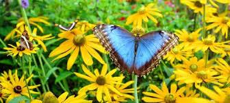 352d7b611896abe8e615_butterfly.jpg