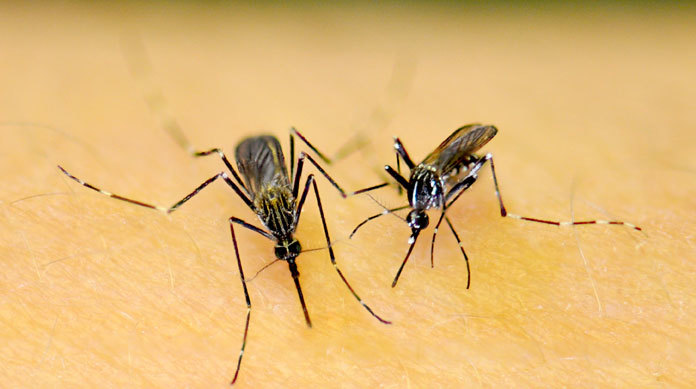 Birds test positive for West Nile Virus