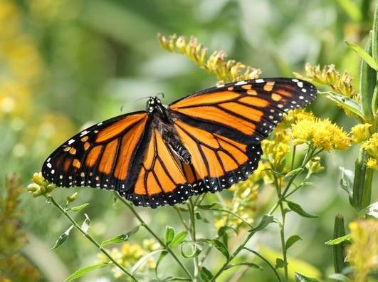 69bef8d7b27cb6a16a35_butterfly.PNG