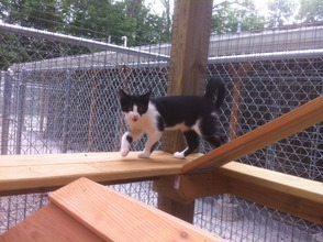 Exploration of the new Kitty Kabana at the Montville Animal Sheltter